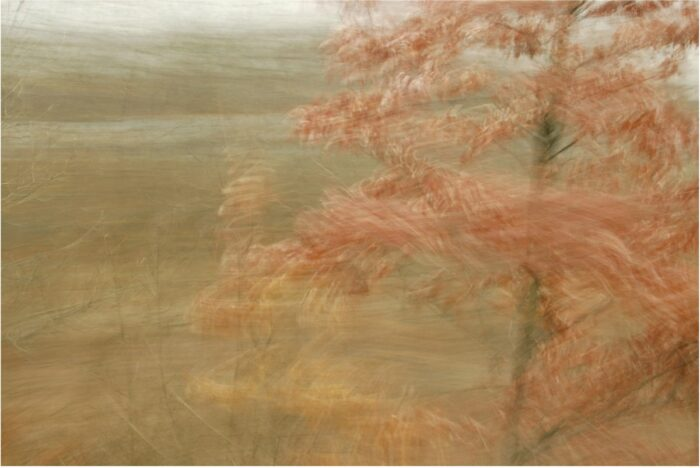 experimental photo art, a small tree in autumn colours with its branches blurred by motion