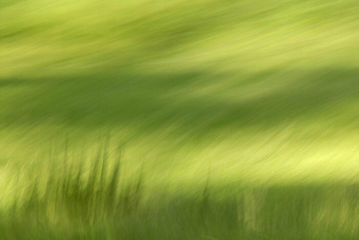 bewegungsunscharfe Fotografie einer Wiese, verschwommen erkennbare Gräserstrukturen in hell- und dunkelgrün