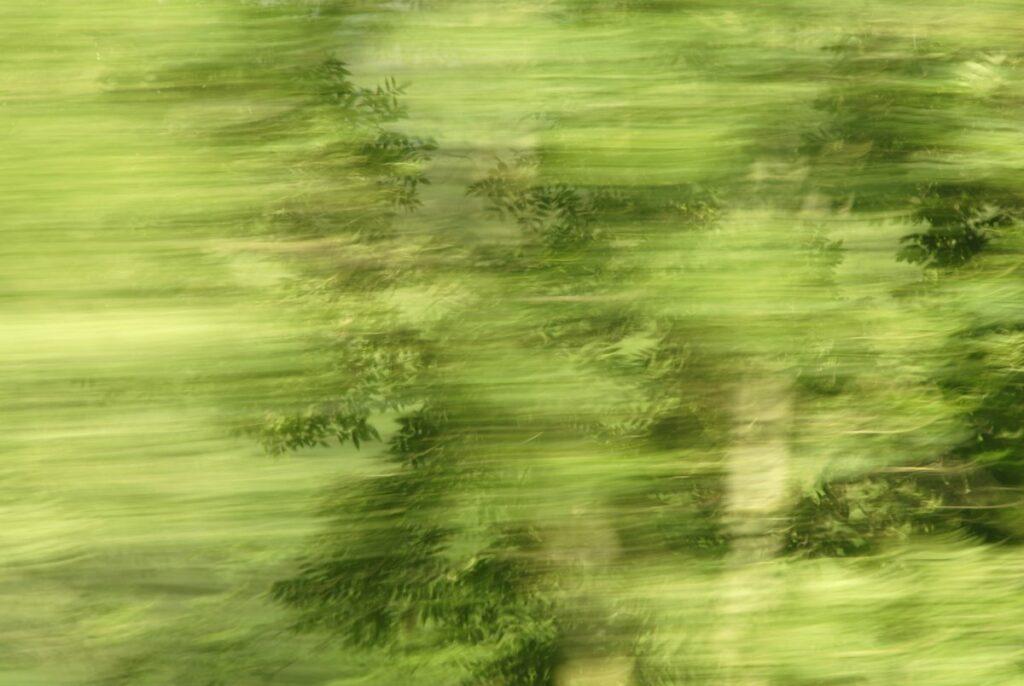 abstrakte Landschaftsfotografie, helle und dunkle Grüntöne in starker Bewegungsunschärfe, einzelne Blätter sind dennoch im Detail zu erkennen