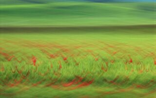 abstract photo art, poppies in a green field turned into a patternby motion blur
