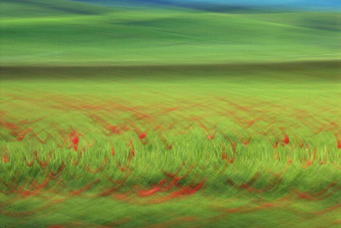 abstrakte Fotokunst, rote Kreislininen auf grünem HIntergrund, entstanden durch Fotografie eines Kornfeldes mit Mohnblumen in Bewegung