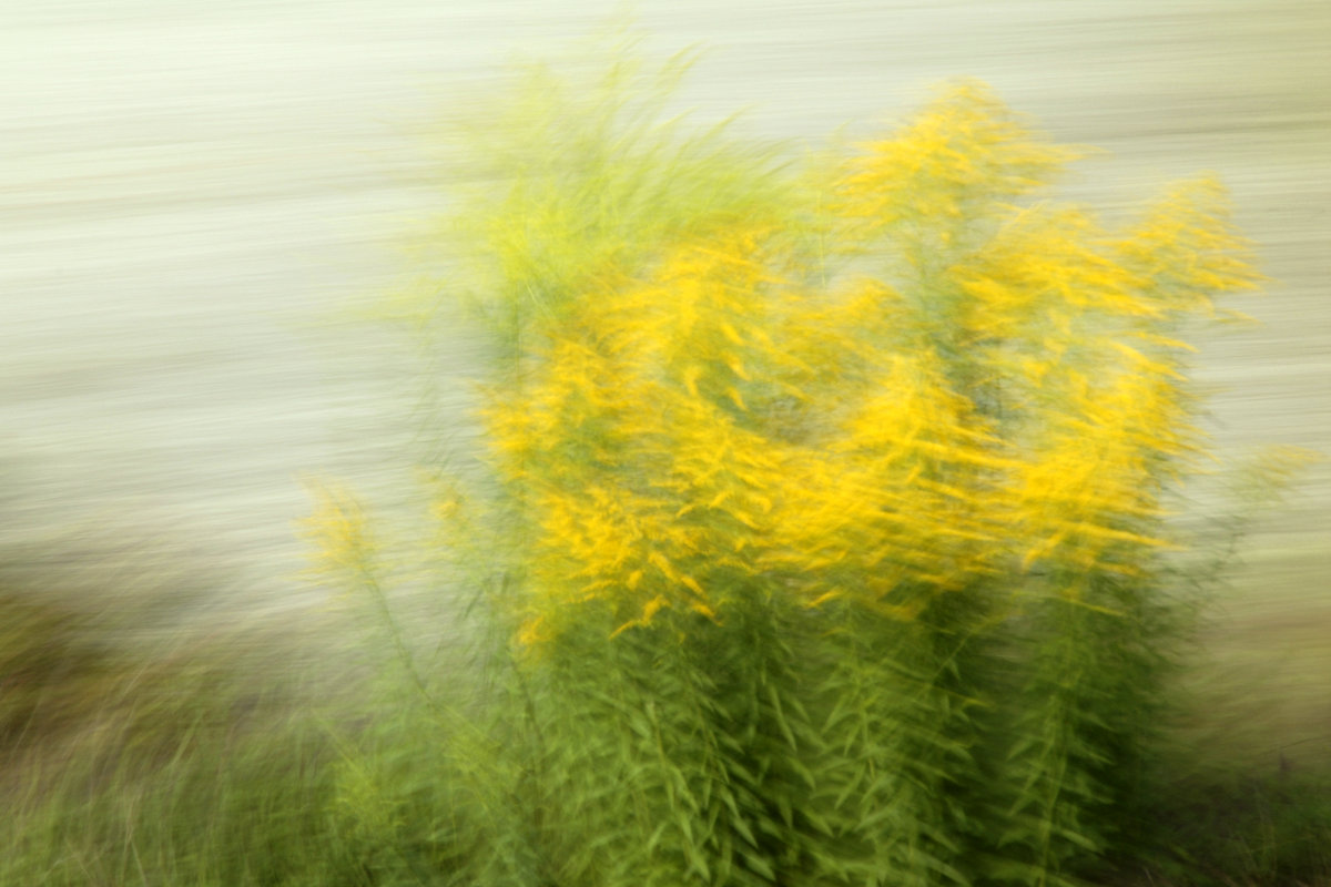 bewegungsunscharfe Fotografie. Eine Staude gelb blühender Pflanzen ist trotz Wischeffekten vor hellem Hintergrund zu erkennen