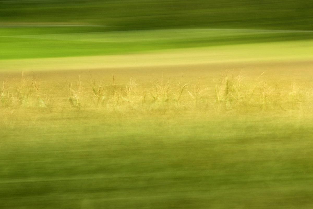 Fotokunst, Im Vordergund und Hintergrund stark durch Bewegungsunschärfe verwischt, in Mittelfeld Details eines Maisfeldes erkennbar