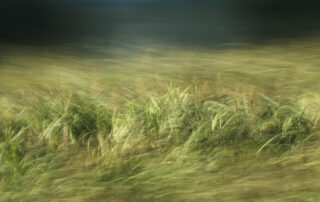 experimental photo art, a landscape of wild reeds in different levels of motion blur