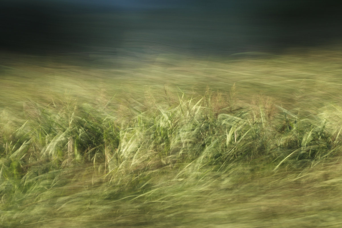 Landschaftsfotografie in Bewegung, Im Vordergund und Hintergrund stark verwischt, in Mittelfeld grüne und braune Details von Schilf erkennbar