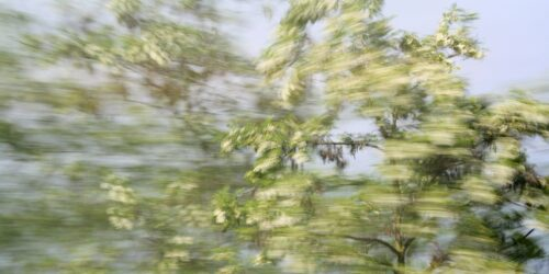 experimental photo art, a treetop with blossoms with motion blur