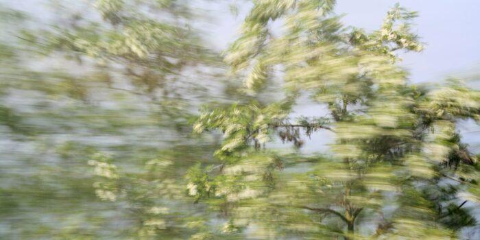 weiß blühender Baumwipfel mit starkter Bewegungsunschärfe fotografiert. sowohl stark verwischte Bereiche als auch vereinzelte detailreiche Elemente