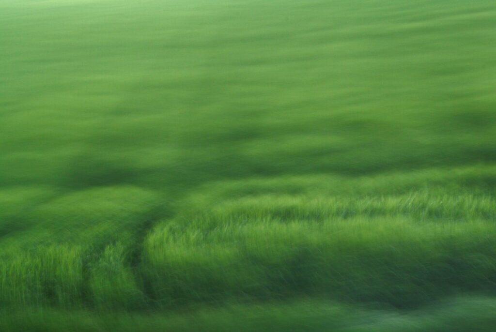 durch Bewegungsunschärfe verfremdetes Feld, flächige Komposition hellerer und dunklerer satter Grüntöne