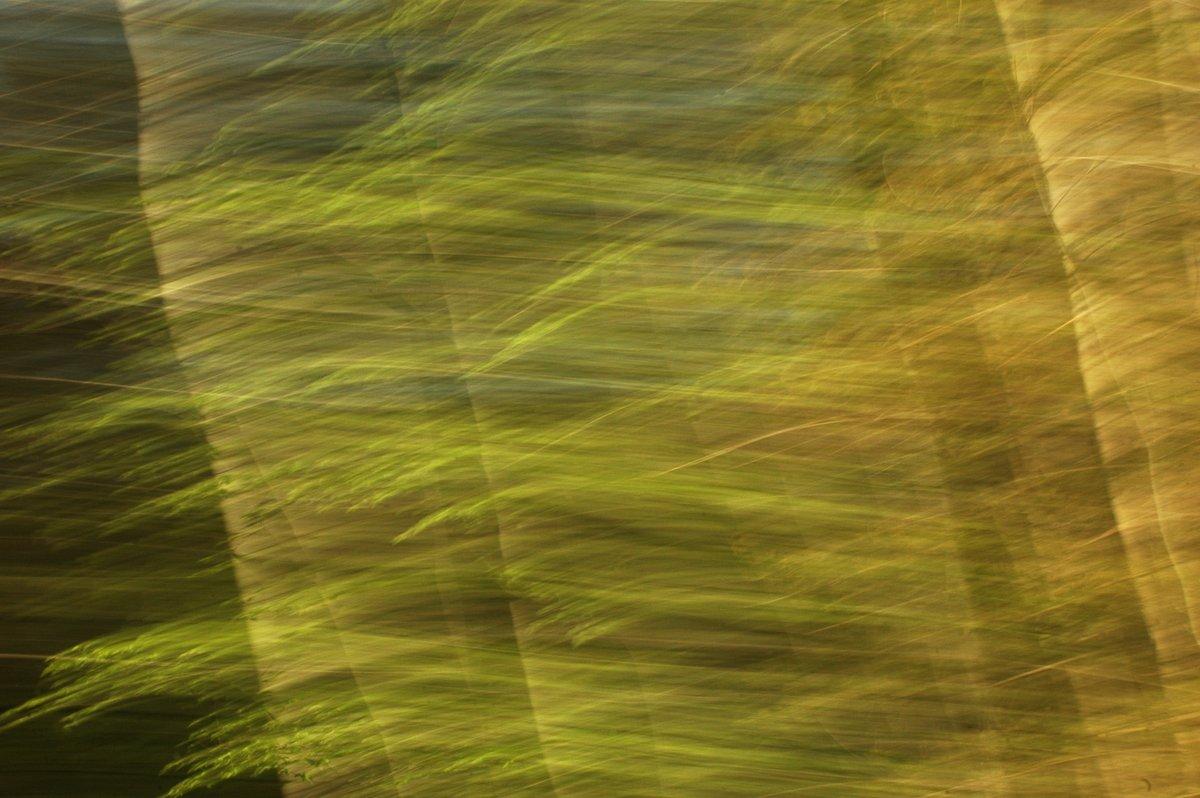 abstrakte Fotokunst, stark bewegungsunscharfe Fotografie eines Waldes, reduziert auf Flächen und verwischte Linien in Braun und hellen Grüntönen