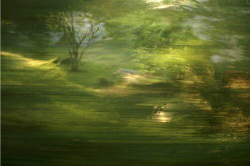 experimentelle Landschaftsfotografie, unterschiedlich stark verwischte Elemente in einem Wald, viel grün, vereinzelte Lichtflecken