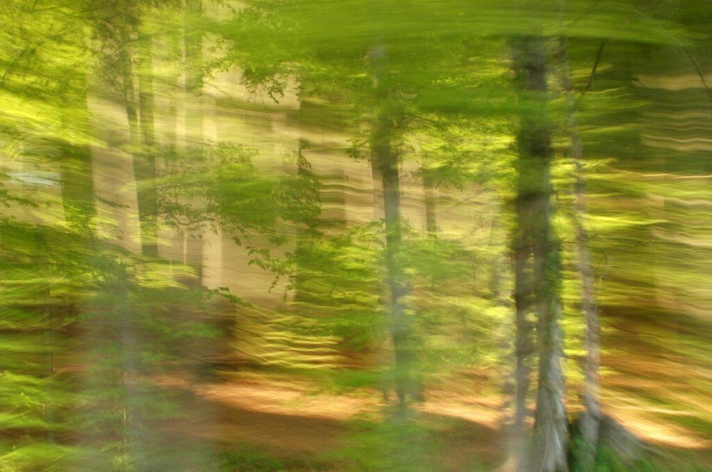 Wald in Bewegung, Fotografie eines hellen, lichtdurchfluteten Waldes mit beabsichtigeter Kamerabewegung, die die Details verwischen lassen