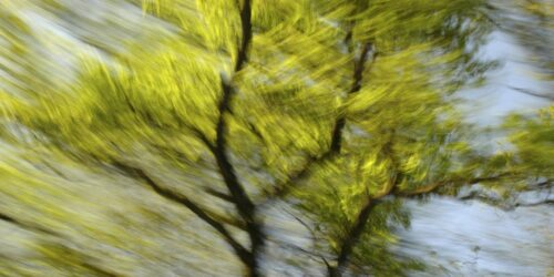 abstract photo art, motion blurred tree tops with light green leaves and dark branches.