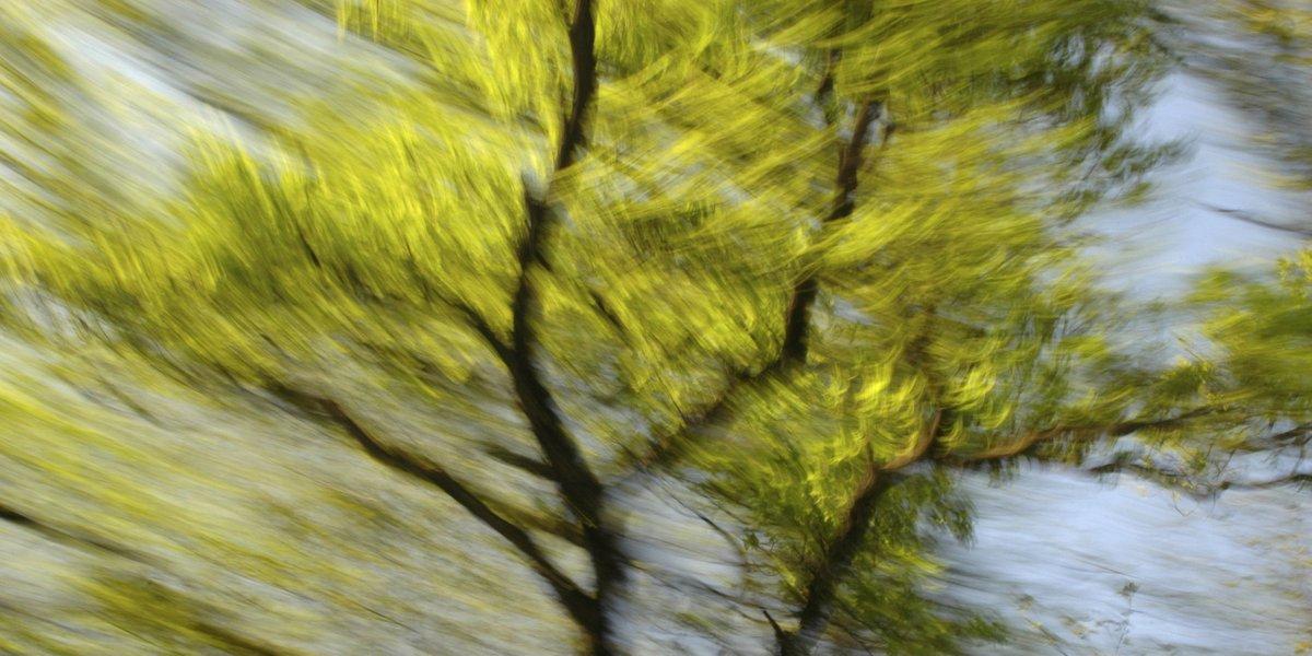 abstrakte Fotokunst, bewegungsunscharfer Baumwipfel mit hellgrünen Blättern und dunklen Ästen