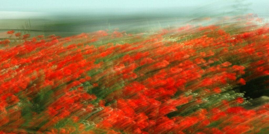 experimentelle Fotokunst, rote Mohnblumen, die durch Bewegungsunschärfe zu Streifen werden