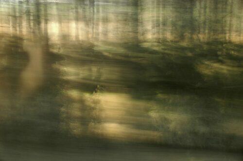 experimentelle Landschaftsfotografie mit Bewegungsunschärfe, ein verschwommener Wald in gedämpften Farben