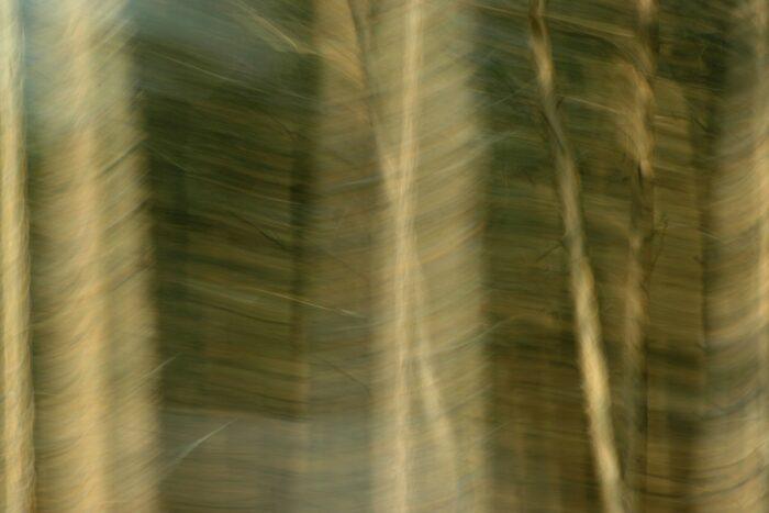 abstrakte Fotokunst, Stämme einer Fichtenmonokultur, durch Bewegungsunschärfe zu einem grafischen Muster in verschiedenen Brauntönen reduziert