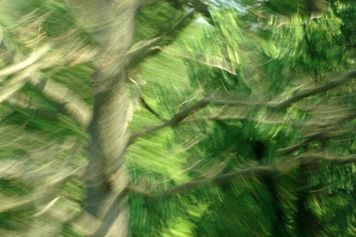 durch Bewegung stark verfremdete Fotografie, Baumwipfel, verschiedene Grün udn Brauntöne