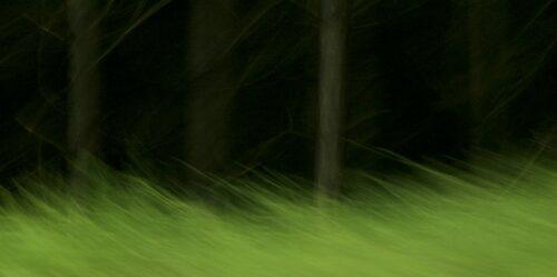Fotokunst, Landschaft in Bewegungsunschärfe. EIn dunkler Wald mit schemenhaft zu erkennenden Baumstämmen, davor eine zerzauste, bewegungsunscharfe Wiese