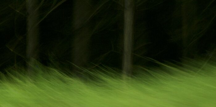abstract photo art, green grass in front of a dark forrest, very blurred by motion