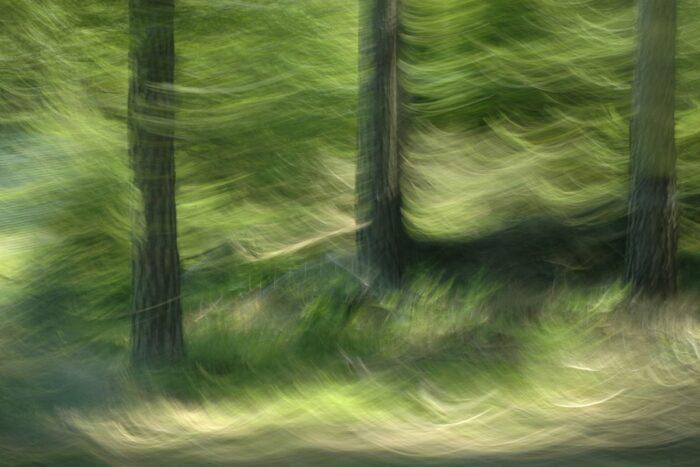Fotokunst mit Bewegungsunschärfe, drei Stämme umgeben von grünen Wellen die durch die Kamerabewegung entstanden sind