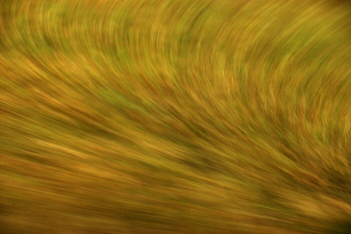 abstract photo art, green and brown grasses turned into a fur like pattern