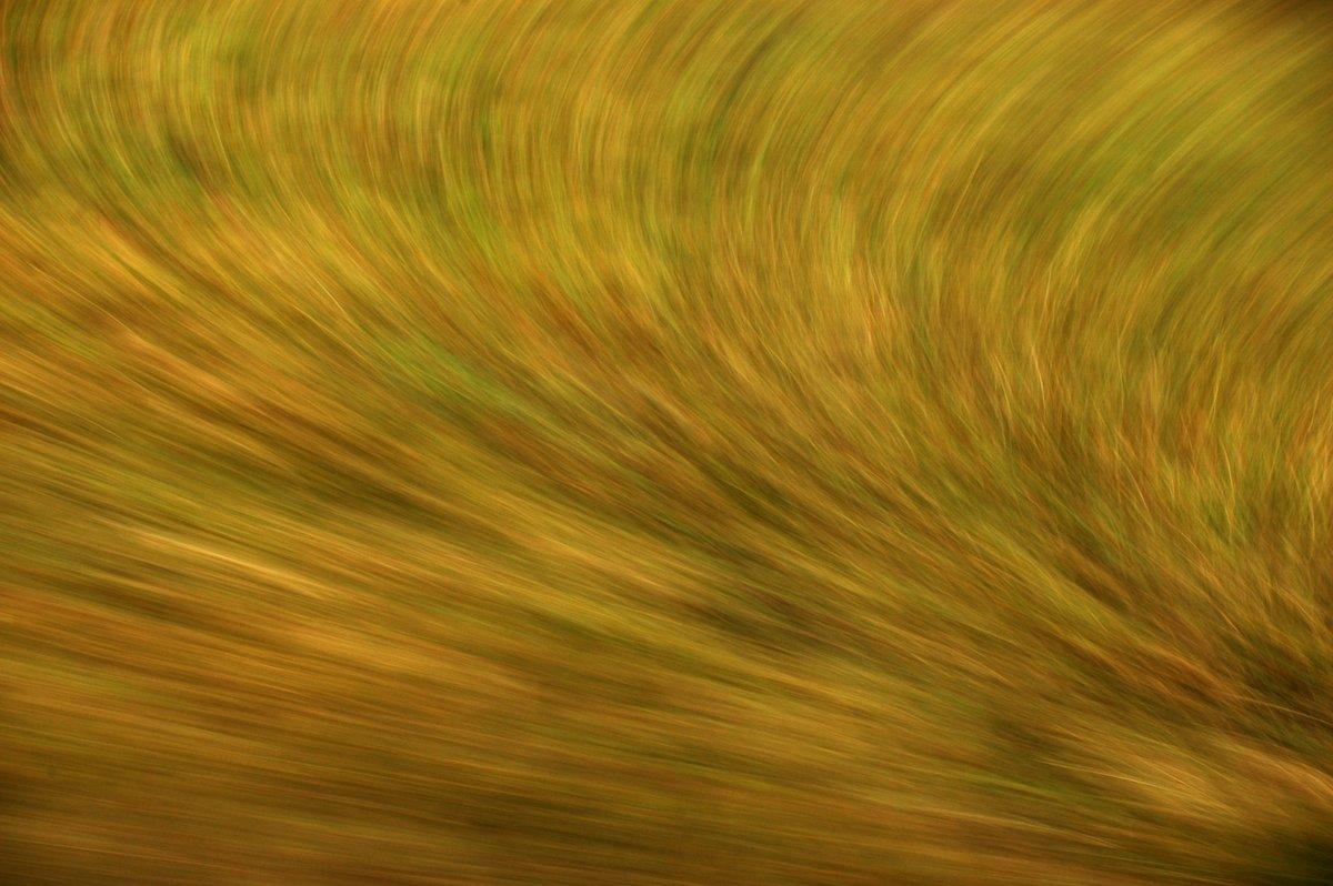 Detailfotografie einer Wiese im Vorbeifahren, abstraktes Muster in Brauntönen mit etwas grün