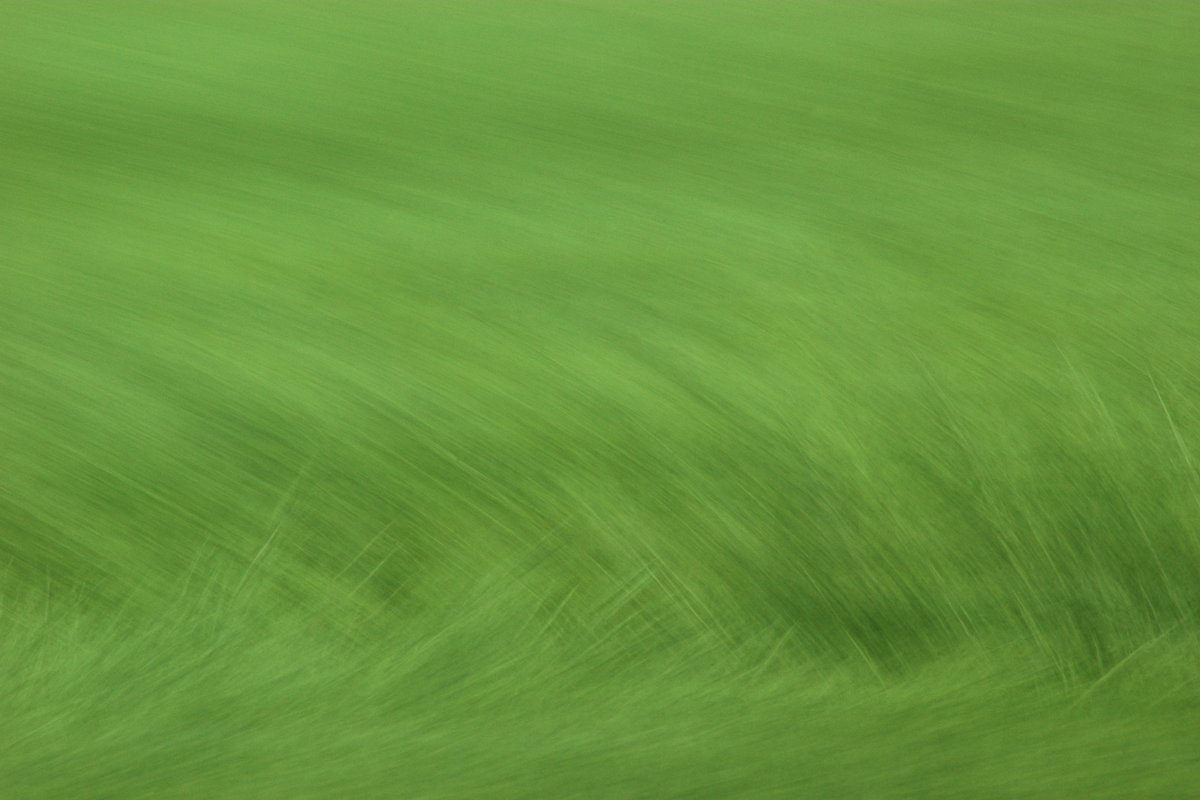 abstract photo art. different shades of green show a hint of grass