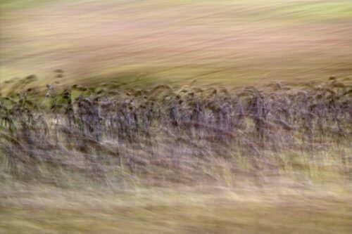 experimental photo art, motion blurred nature in brown and lilac colours