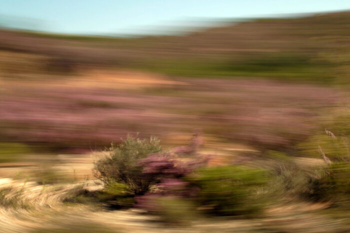 Fotokunst, stark bewegungsunscharfe Landschaft grünen und Lilanen Büschen, die sich um einen Punkt zu drehen scheint