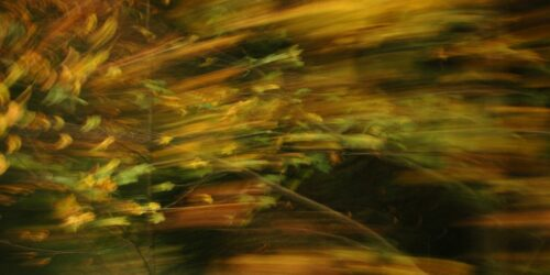 experimental photo art, leaves in autumn colours turned into stripes by motion blur