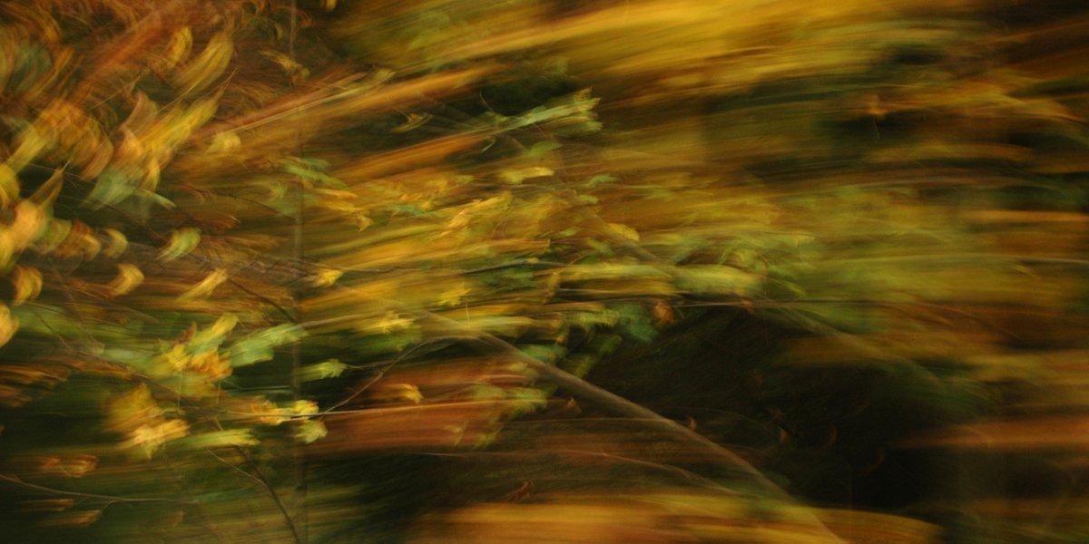 experimentelle Fotografie bunter Blätter vor dunklem Hintergrund, durch Bewegung verwischt