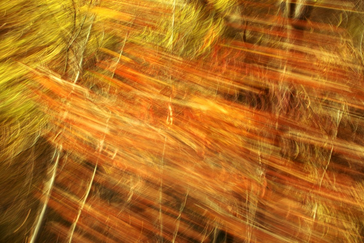 motion blur on a landscape photography. Autumn colours turned into a pattern that seems interwoven