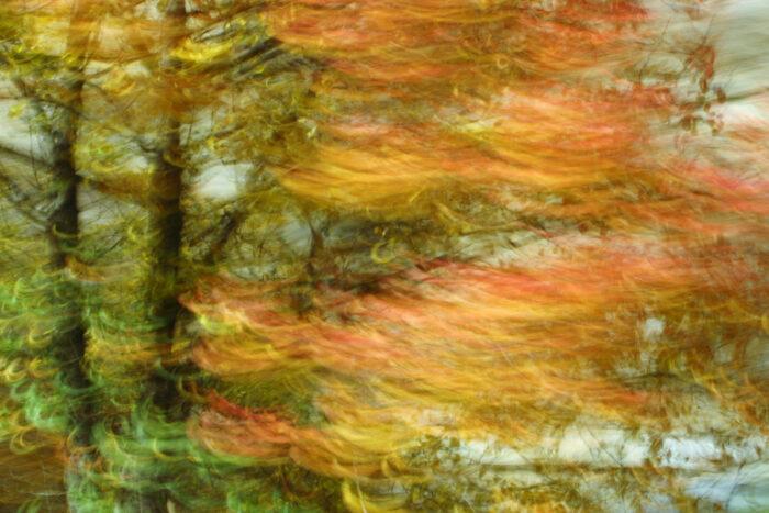 experimentelle Fotografie, bewegungsunscharfe Baumkrone mit vielfarbigem Laub