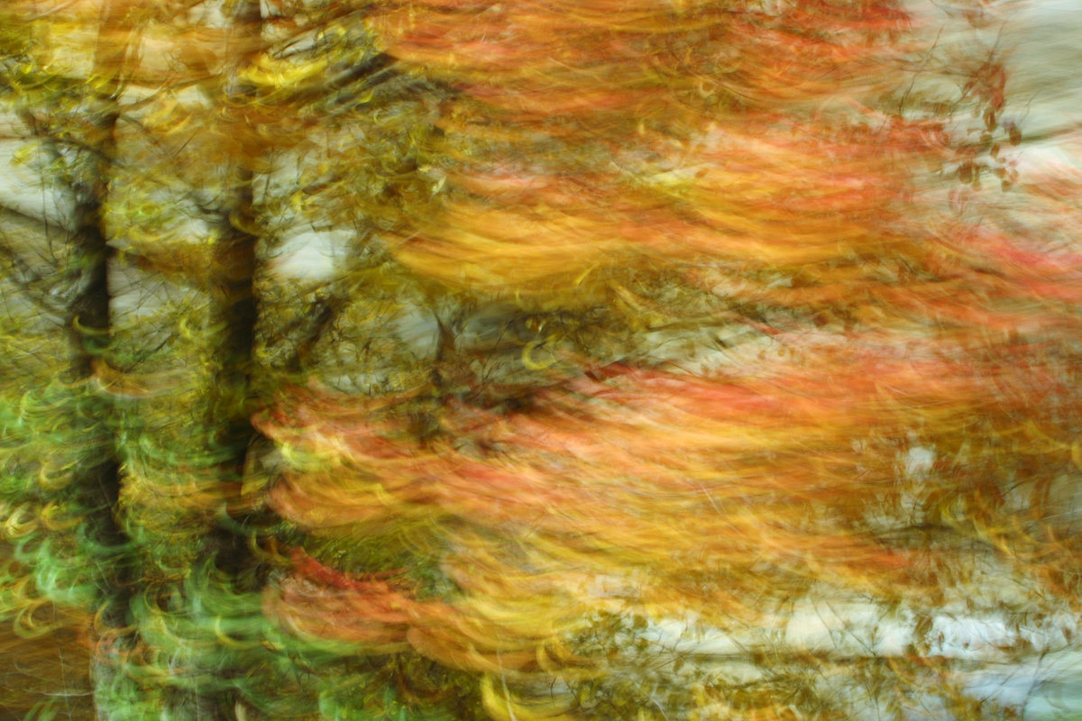 Experimental photo art, a colourful tree turned into wave patterns by motion blur