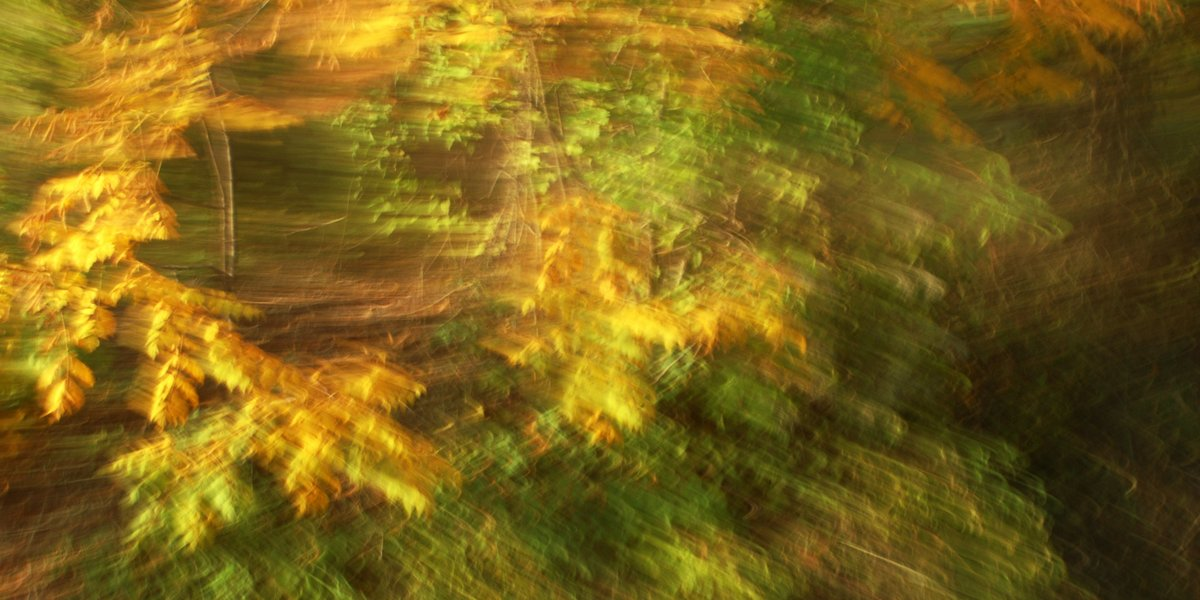 experimental photo art, autumn leaves turned soft by motion blur