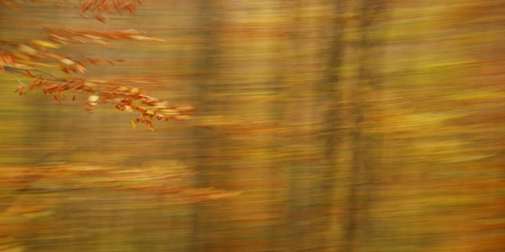 photo art, a detailed branch in autumn colours in fron of a background with strong motion blur