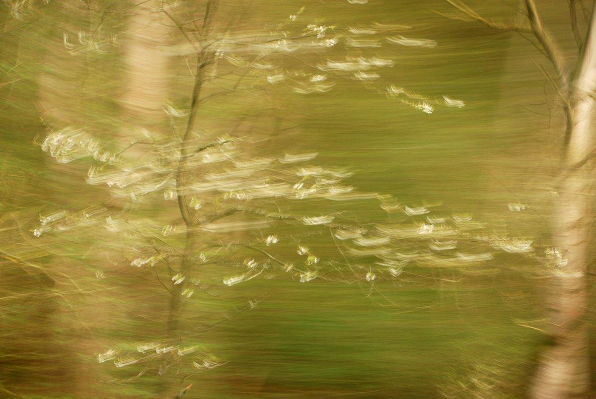 Natur in Bewegung, bewegungsunscharfe Fotografie eines weiß blühenden Schößlings vor grün-braun verwischtem Hintergrund