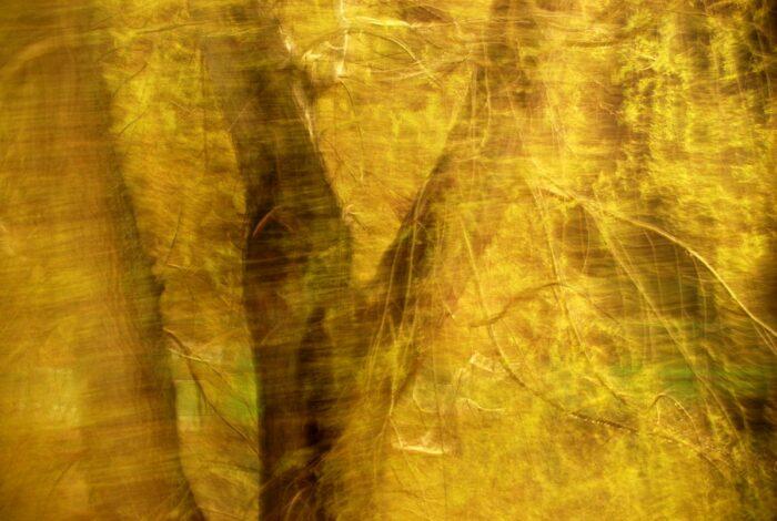 bewegte Fotografie, Detail eines Baumes mit Bewegungsunschärfe, der Stamm verschwimmt hinter goldenen Blättern