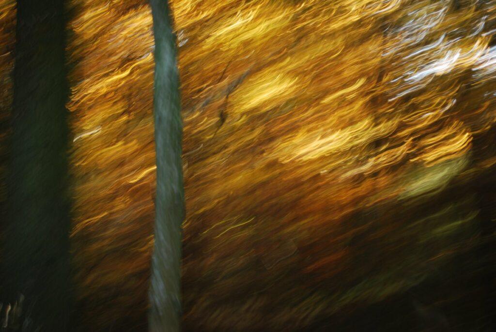 abstrakte Fotografie, Stam vor stark verwischten Herbstfarben