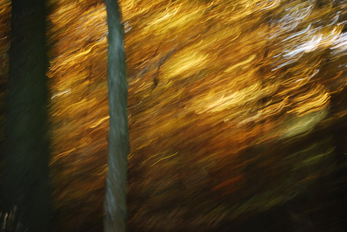 experimental photo art, intentional camera movement on an autumn forrest