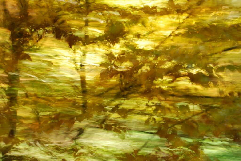 Experimental photo art. A treetop in motion, partly blurred, some details recognizable
