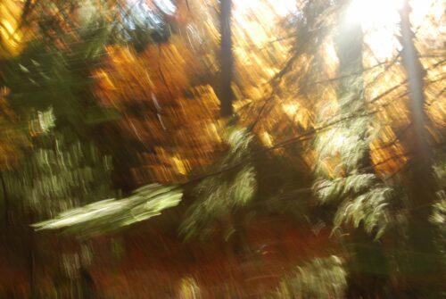 abstrakte Fotokunst, in verschiedene Richtungen verwischte Grün-, Gelb- und Brauntöne