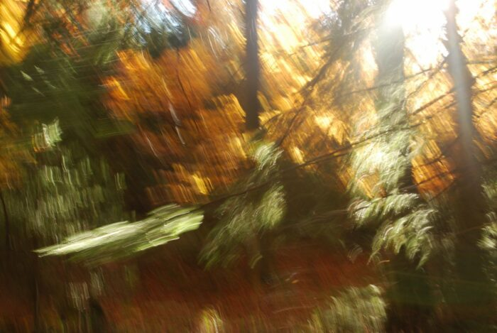 photo art with intentional camera movement, a detail of an autumn forrest with motion blur