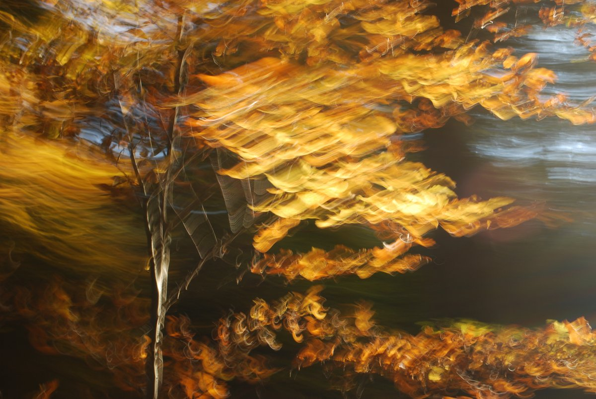 experimental photograph of an autumn tree wiht golden leaves. Strong motion blur by intentional camera movement