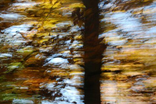 dunkler Stamm vor bewegungsunscharfen Herbstblättern