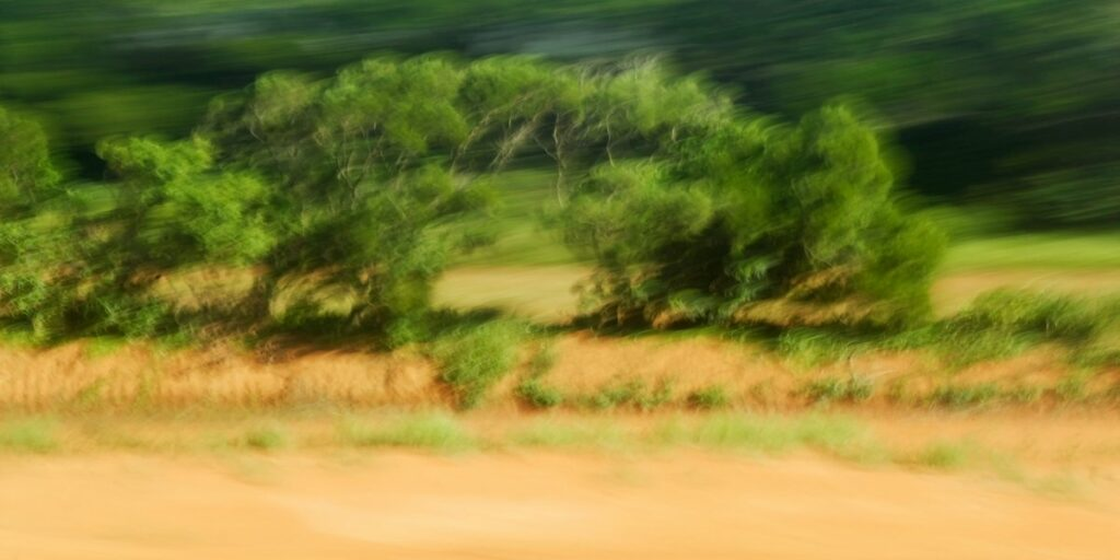 experimental landscape photography, a large green bush on golden grass, blurred by motion