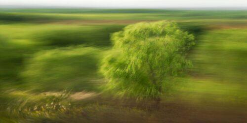 Landschaftsfotografie in Bewegung, ein erkennbarer aber unscharfer Baum vor einem Hintergrund, der durch Bewegung verwischt ist