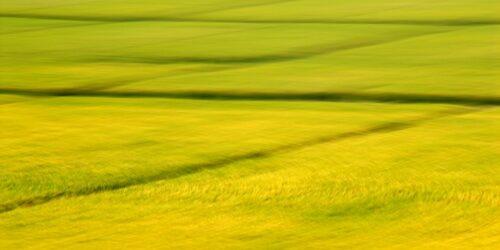 abstrakte Fotokunst, gelb blühende Felder, durch Bewegungsunschäfte zu Flächen reduziert