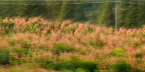 Landschaft in Bewegung, rote und grüne Blätter in Bewegungsunschärfe
