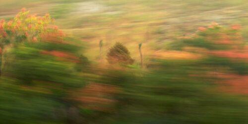 experimentelle Fotokunst, rote und grüne Natur in Bewegung, zum Teil sehr verwischt, stellenweise in Details erkennbar